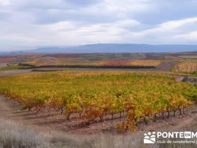 Enología en Rioja - Senderismo Camino de Santiago; senderismo en cantabria